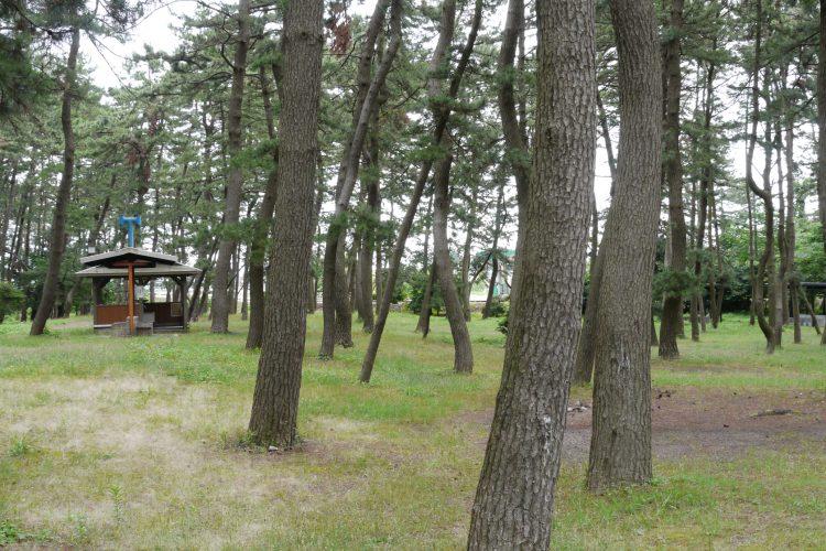大島キャンプ