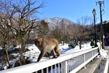 宇奈月温泉-猿