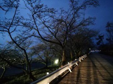 宮野山桜2