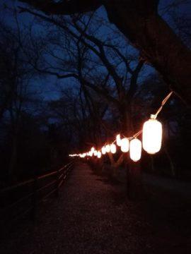 宮野山桜3