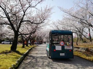 宮野山桜開花状況