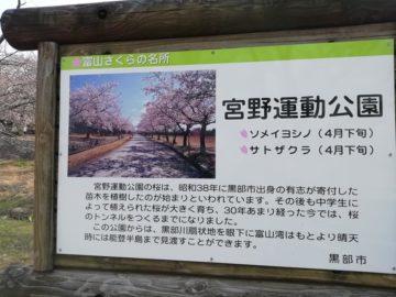宮野山桜まつりライトアップ3